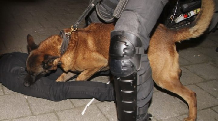 Hollanda'dan Türk Halkına Polis Köpekleri İle Müdahalesi