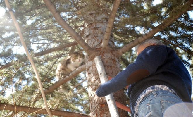 Ağaçta Mahsur Kalan Kediyi Kurtardı