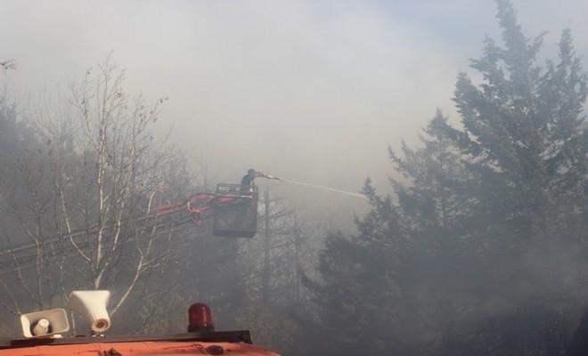 Anız Yangını Ormanlık Alanı Kül Etti