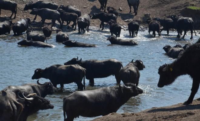 Serengeti Değil Balıkesir