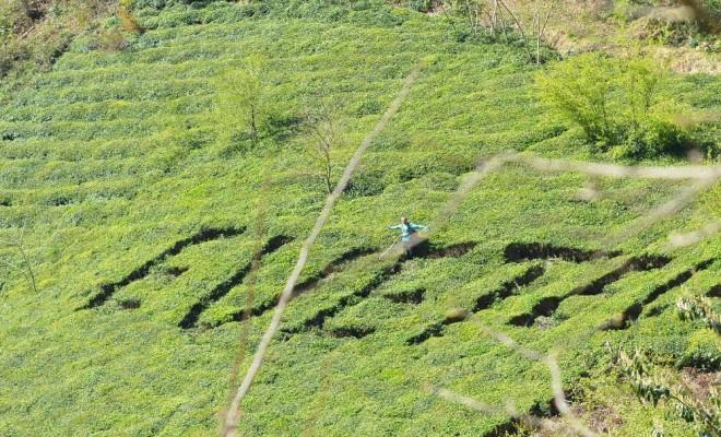 Referandumda Kullanacağı Oyu Çay Bahçesine Yazdı