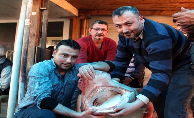 Mersinde Yakalandı: 4 Metre, 700 Kilo
