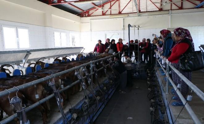 45 Kadın Uygulamalı Çobanlık Eğitimi Alıyor