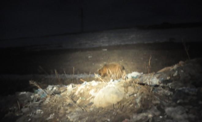 Bozayılar Çöplüğü Mesken Tuttu