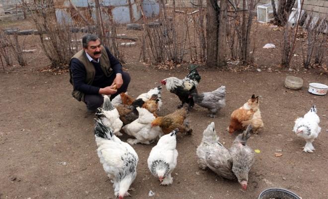 Ağrıdan Horoz Ve Tavuk İhracatı