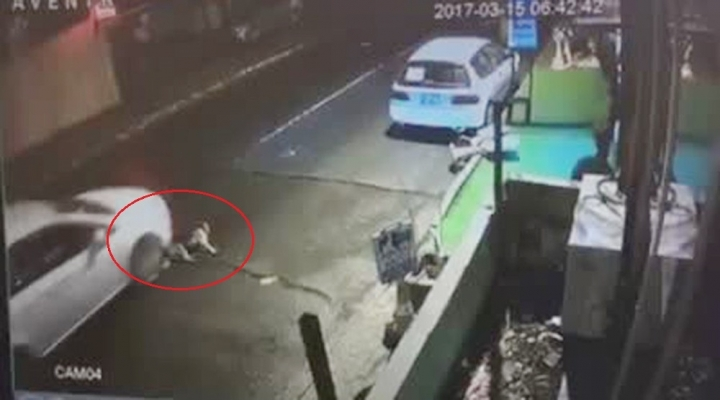 Bunu Yapan İnsan Olamaz: Yaralı Köpeği...
