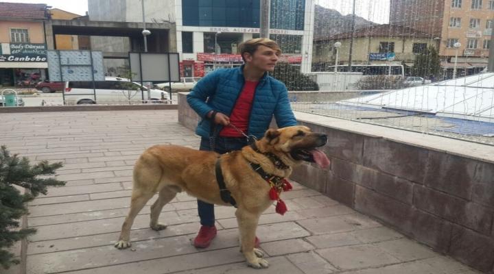 Hollandayı Kangal Köpekleri İle Protesto Ettiler