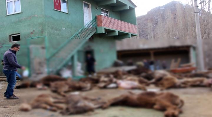 Erzurumda Korkunç Manzara!