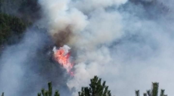 Kastamonuda Orman Yangınları