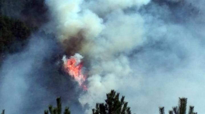 Orman Yangını 20 Saatte Kontrol Altına Alındı