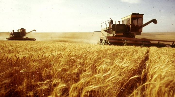 Yeterlilk Derecesi En Yüksek Ürün Buğday