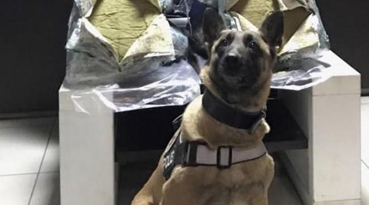 Polis istihbarat aldı: 59 kilo esrar ele geçirildi